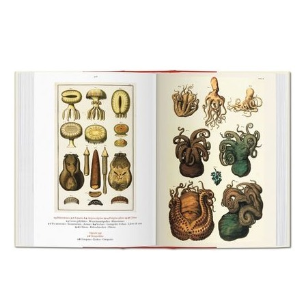 taschen_seba_cabinet_of_natural_curiosities_3_formost.png